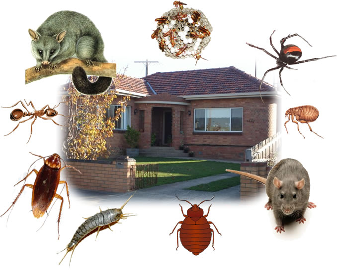 Melbourne house with images of unwanted pests