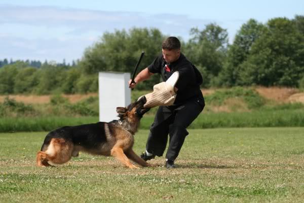 schutzhund023