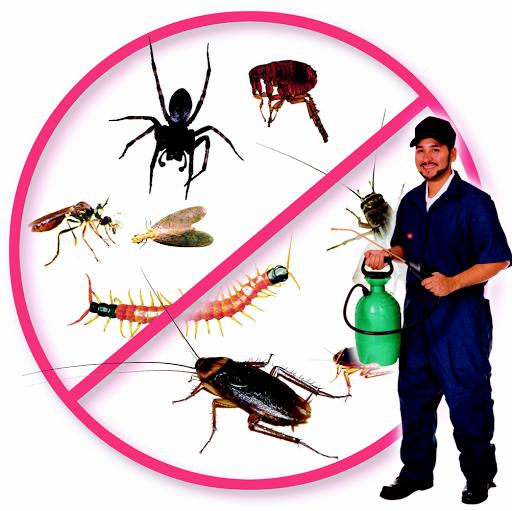 Pest Control Provider 2