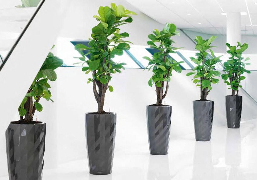 planters9